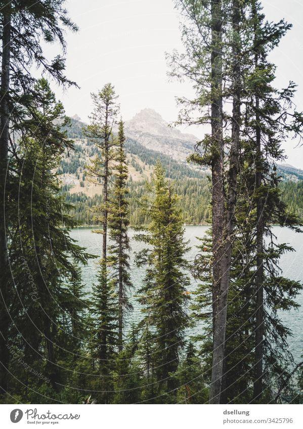Nadelbäume vor einem See, im Hintergrund ein Berggipfel Wellness Felsen Zeit für sich Expedition Pause Camping Erde Klimawandel harmonisch Kontrast Urelemente