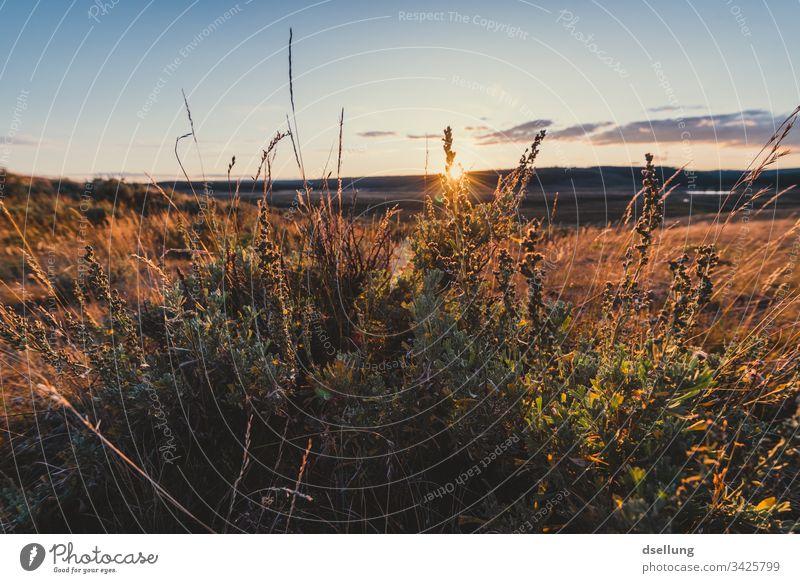 Gräser im Sonnenuntergang Ferne Abenddämmerung Grass Sonnenstrahlen Urelemente orange Weitwinkel Totale Zentralperspektive Starke Tiefenschärfe Gegenlicht