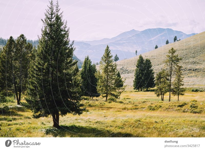Einzelne Nadelbäume vor Gebirgspanorama Pflanze Nationalpark Leben USA Nadelbaum Bäume Baum Hügel schön wandern Tourismus Klima Gipfel Wolken Sommer Ausflug