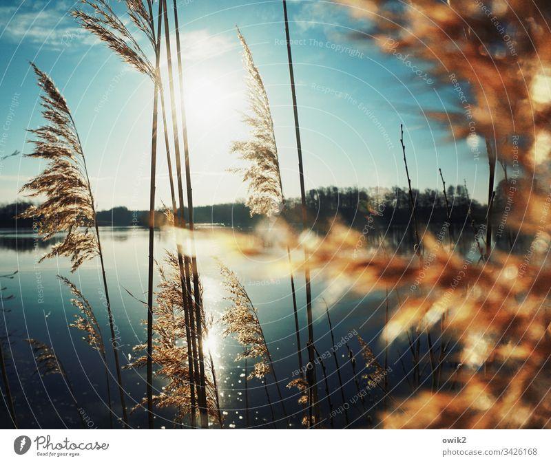Into the Mystic See Röhricht Sonne leuchten strahlen Natur draußen mystisch geheimnisvoll Außenaufnahme Farbfoto Gegenlicht Menschenleer Idylle Kontrast Wasser