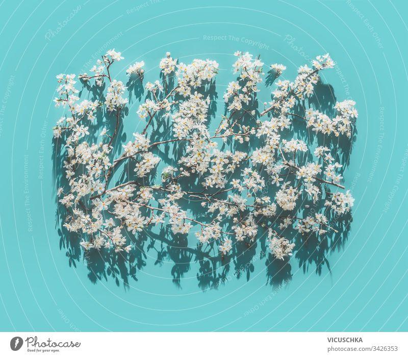 Frühlingsweißer Blütenhintergrund auf türkisblauem Hintergrund im Sonnenlicht mit Schatten, Ansicht von oben. Frühlingsnatur Draufsicht Natur natürlich Muster
