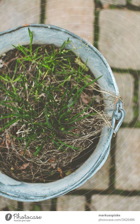 Schnittlauch säen Selbstversorung Urban Gardening Kräuter & Gewürze selbstversorger Blumentopf Garten einsäen