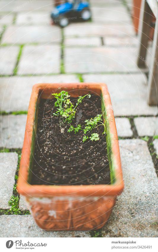 Petersilie säen Selbstversorung Urban Gardening Kräuter & Gewürze selbstversorger Blumentopf Garten einsäen