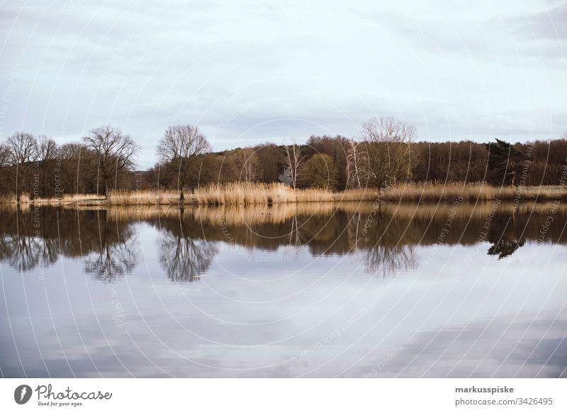 See Spiegelung mit Bäumen ohne Lauf see Spiegelung im Wasser wasser teich Frühling Frühjahr Schilfrohr