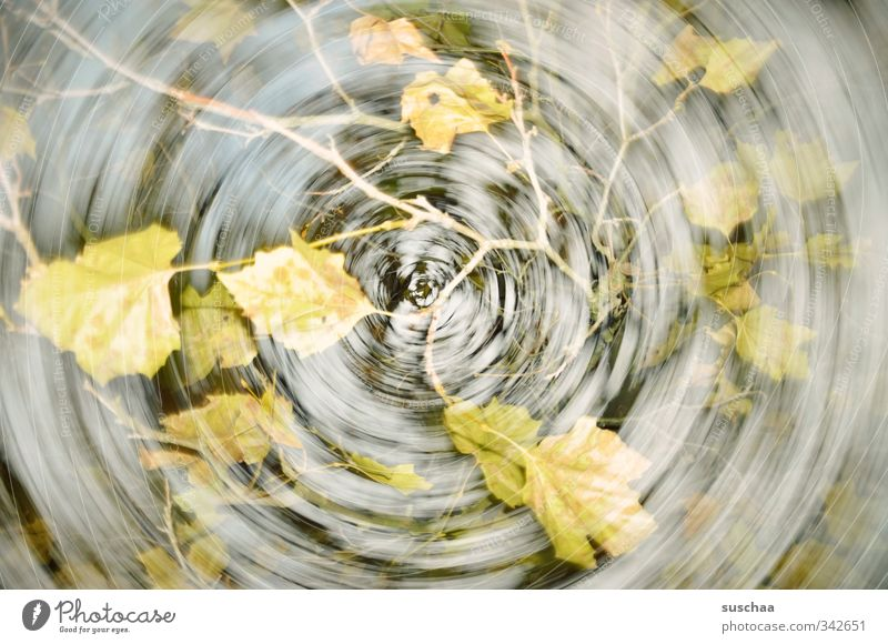 mein herbst Kunstwerk Umwelt Natur Luft Herbst Klimawandel Wind Baum Blatt schön trist grau grün Dynamik rotieren Bewegung Doppelbelichtung Ast Gedeckte Farben