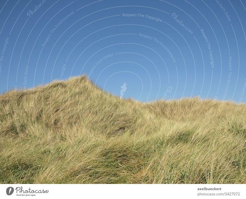 Dünen vor blauem Himmel gras bewachsen hintergrund textfreiraum sylt deutschland Dünengras Natur Landschaft Deutschland Nordsee Küste Tag Erholung