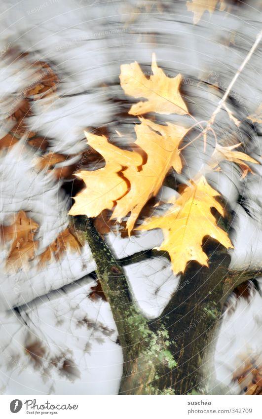 mein herbst II Umwelt Natur Herbst Klima Baum Blatt trist Bewegung Vergänglichkeit Wandel & Veränderung Ast Baumstamm Himmel Dynamik Gedeckte Farben