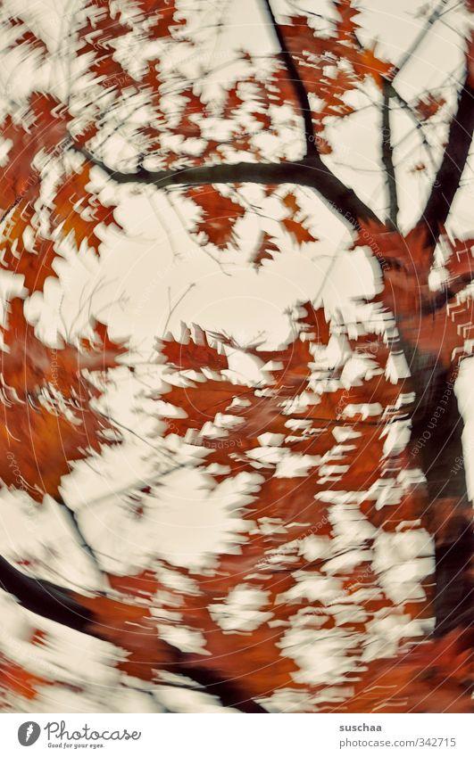 ja is denn schon herbst? Natur Pflanze Luft Himmel Herbst Wind Sturm Baum Blatt Holz rot Kreativität Politische Bewegungen Dynamik Ast rotieren oben Farbfoto
