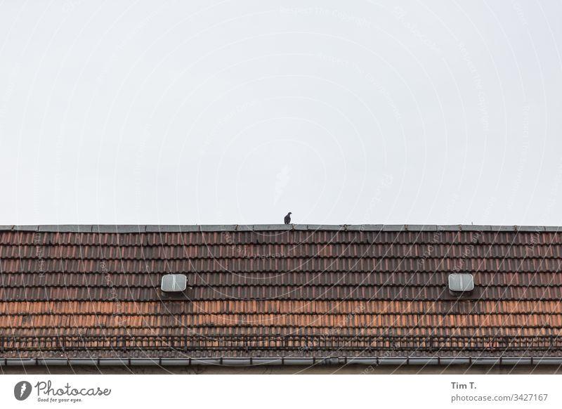 ne Taube auf dem Dach Berlin Schönhauser Allee Prenzlauer Berg Altbau Dachluke Stadt Außenaufnahme Menschenleer Altstadt Hauptstadt Stadtzentrum Fenster