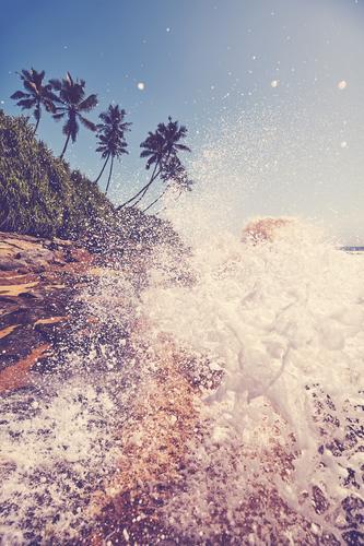 Tropischer Strand mit gegen Felsen schlagender Welle. MEER Sommer Wasser winken platschen Absturz reisen Natur Handfläche Baum Meer retro gefiltert altehrwürdig