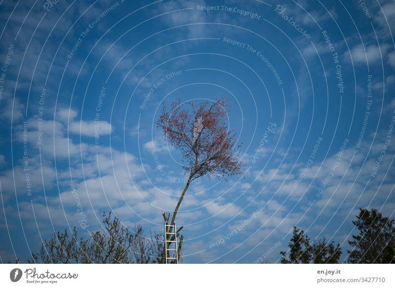 Eine Leiter, die für den Baumbeschnitt an einem Baum lehnt, unter blauem Himmel mit Schäfchenwolken Baumschnitt Schneiden Blau Blauer Himmel Wolken Wölkchen