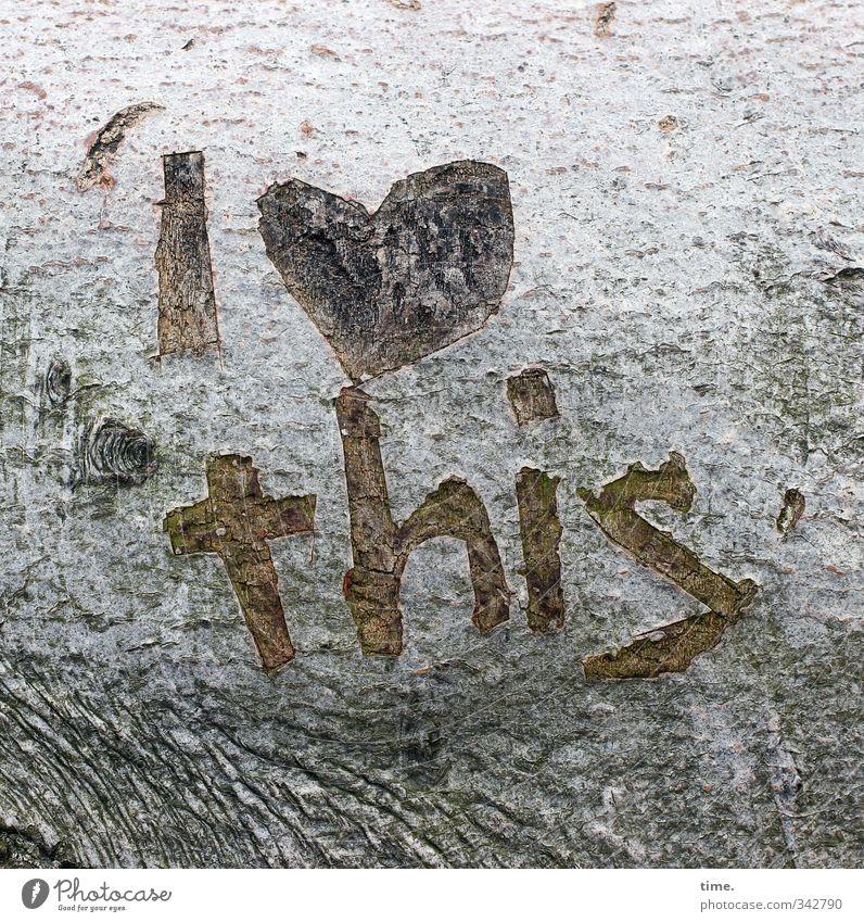 Verliebt in die Westküste Baum Baumrinde Totholz Strandgut Zeichen Schriftzeichen Graffiti Gefühle Lebensfreude Begeisterung Euphorie Liebe Verliebtheit Treue