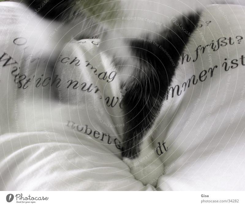 Der Sprung ins Bett weiß schwarz Katze Schriftzeichen Häusliches Leben Fell Pfote Text Kissen Polster Gedicht Lyrik