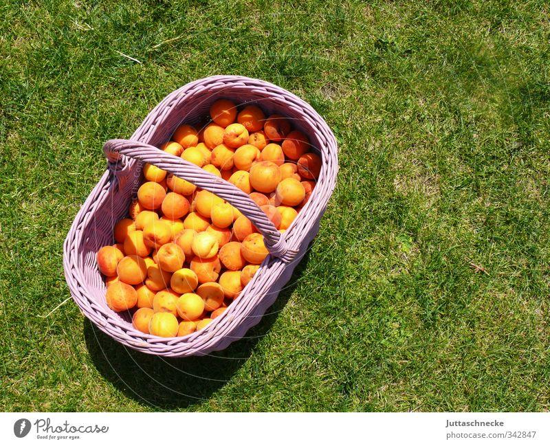 Sommer, komm doch! Lebensmittel Frucht Aprikose Ernährung Picknick Bioprodukte Vegetarische Ernährung Gesunde Ernährung Gras Korb Essen frisch Gesundheit lecker