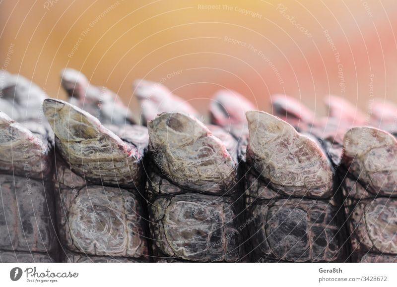 Alligator-Krokodil-Haut im Detail Nahaufnahme Alligatorenhaut Tier Hintergrund braun schließen abschließen Farbe Krokodilhaut Detailaufnahme detailliert