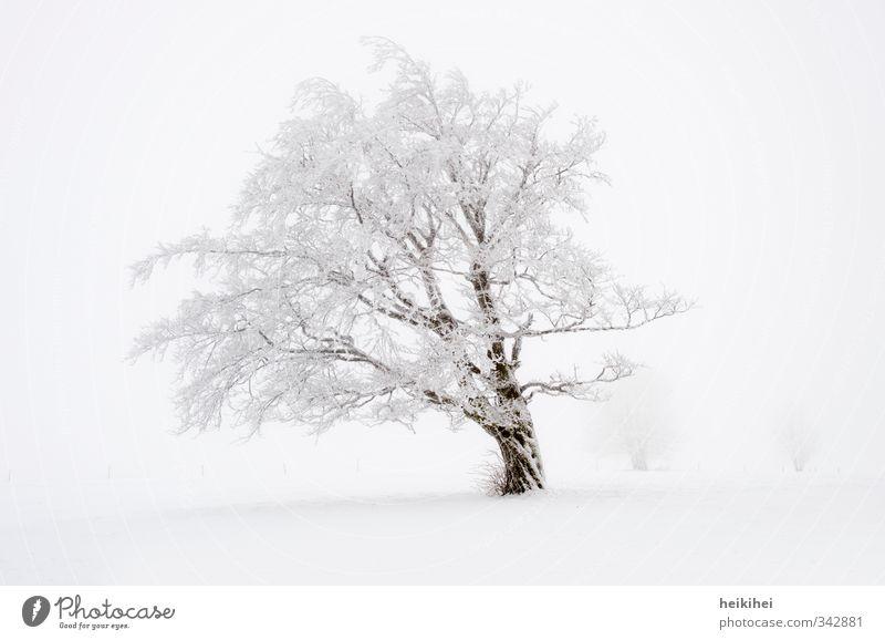 Winterland Ferien & Urlaub & Reisen Schnee Winterurlaub Natur Landschaft Wetter Nebel Baum Berge u. Gebirge kalt schön braun weiß Einsamkeit Gedeckte Farben