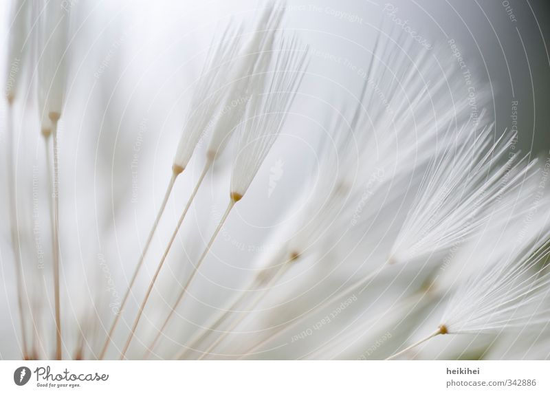 gen Himmel Natur blau weiß Pflanze Blume Landschaft Tier Wiese Frühling grau Garten Park