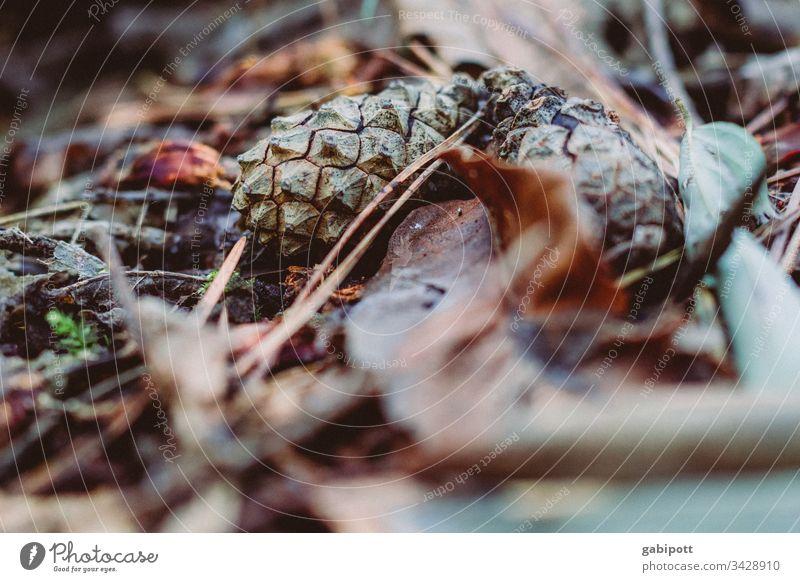 es wird schon Herbst laub Wald Waldboden Tannenzapfen Natur Umwelt Nahaufnahme Schwache Tiefenschärfe Detailaufnahme braun Menschenleer Pflanze Farbfoto