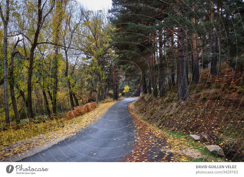Waldweg im Herbst gelb rot Kontrast Feld ocker Blatt Weg gefallen Regen Natur Sicherheit bewältigen Licht Selbstvertrauen für Pflanze verirrt Einsamkeit