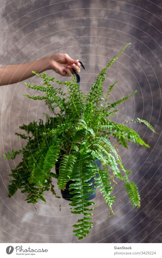 Frau mit Farnpflanze Topf Blume Beteiligung Halt Hände Pflanze Blumenhändler Geschenk geblümt Wurmfarn Pteridophyta Hintergrund Person Blütezeit botanisch grün