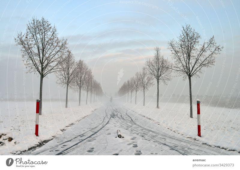 Allee mit Schnee und Fahrradspuren Winter Baum Eis Himmel Spuren Landschaft Natur Kälte Frost blau weiß