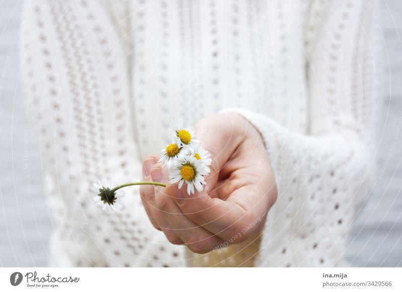 Blumen für dich! Gänseblümchen Gänseblumen weiß gelb Blüten Blumenstrauß Muttertag Valentinstag Pflanze schön Frühling Frühlingsbeginn Natur neutral Geburtstag