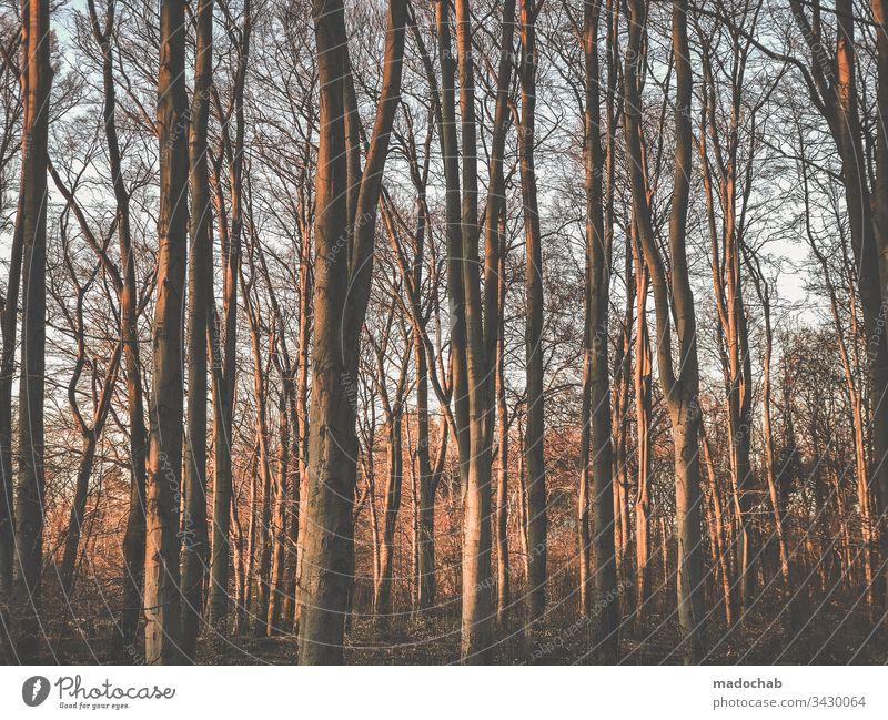 Im Wald bäume baumstämme natur Umwelt Menschenleer Baumstämme Natur Pflanze Holz Baumstamm Erholung Erholungsgebiet ruhig Außenaufnahme Licht Bäume Sonnenlicht