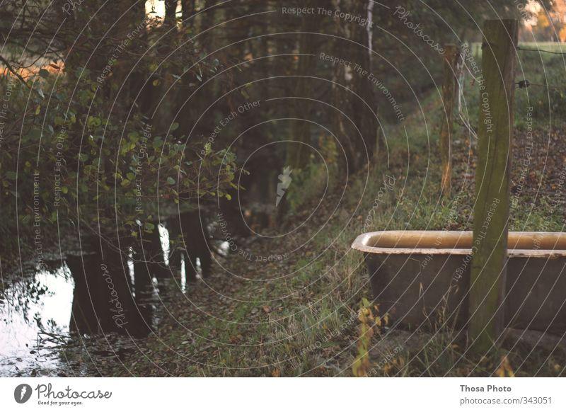 Badewanne Kuh Pferd Stahl Rost braun grau Viehtränke Trog Herbst Sommer Bach Graben Blatt Bär Baum grün Farbfoto Außenaufnahme Abend Schwimmbad