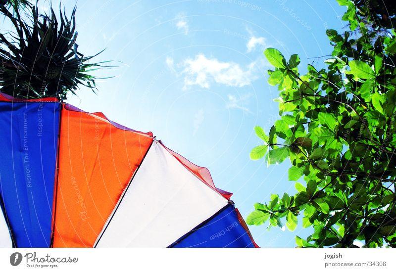 Nach oben geguckt Himmel weiß Baum Sonne grün blau rot Ferien & Urlaub & Reisen Blatt Wolken Sonnenschirm Palme Thailand dreifarbig