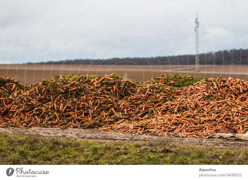 Hübsche sexy kaukasische Karotten verrotten vor sich hin während ein Mast gelangweilt seinem Spannungsbogen hinterherschaut Berg Gemüse Vegane Ernährung