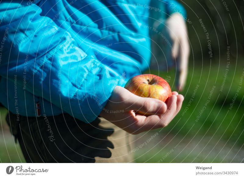 Apfel Picknick Kind Wandern Obst Gesunde Ernährung Farbfoto Vegetarische Ernährung Bioprodukte Gesundheit Außenaufnahme Frucht Lebensmittel frisch Tag Essen