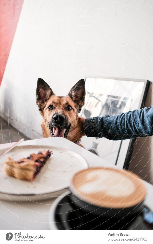 Hund in einem Cafe Dessert weiß Café Kaffee Kaffeetasse Pasteten Kaffeepause Kaffeehaus Ingwer-Hund