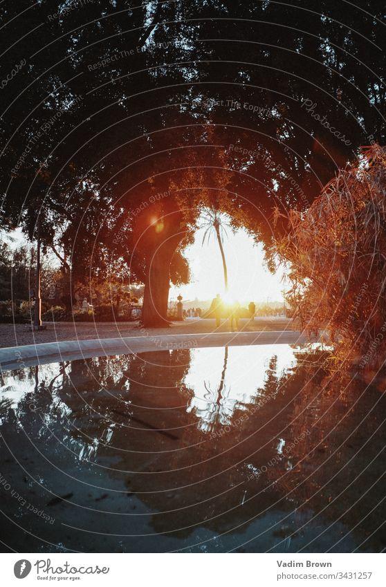 Sonnenuntergang in Rom Wasser Springbrunnen Handfläche Bäume