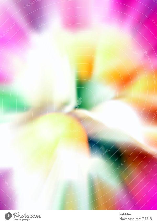 Farbenpracht mehrfarbig violett gelb grün Mitte Wasserwirbel weich Makroaufnahme Nahaufnahme Bewegung Reaktionen u. Effekte