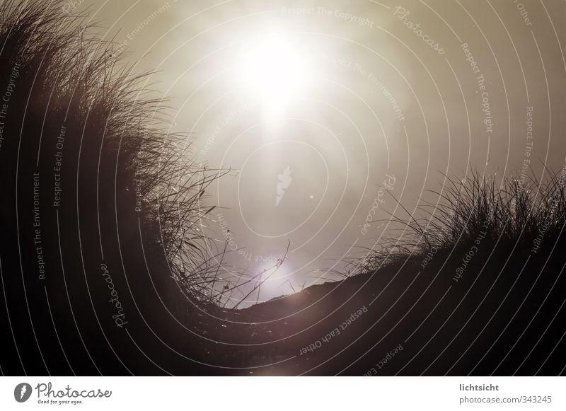 Dune Natur Landschaft Pflanze Sand Luft Wolkenloser Himmel Sonne Sommer Herbst Schönes Wetter Wärme Gras Hügel Küste Strand Nordsee Ostsee Meer Insel schwarz