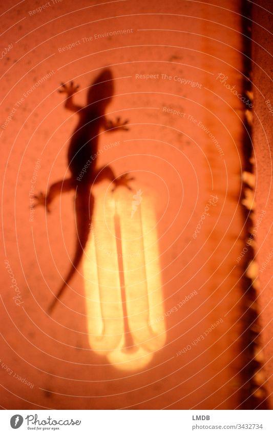 auswegslose Hitze??? - 2 Echse Eidechse orange Lampe glühen heiß glühend Stoff Glühbirne Klimaerwärmung Erderwärmung Klimawandel Tokey Licht hell Elektrizität