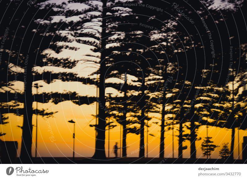 Joggen am Abend in der Nähe vom Strand Sonnenuntergang Tageslicht Farbe Bäume Textfreiraum oben Farbfoto Schönes Wetter beobachten einzigartig Menschenleer