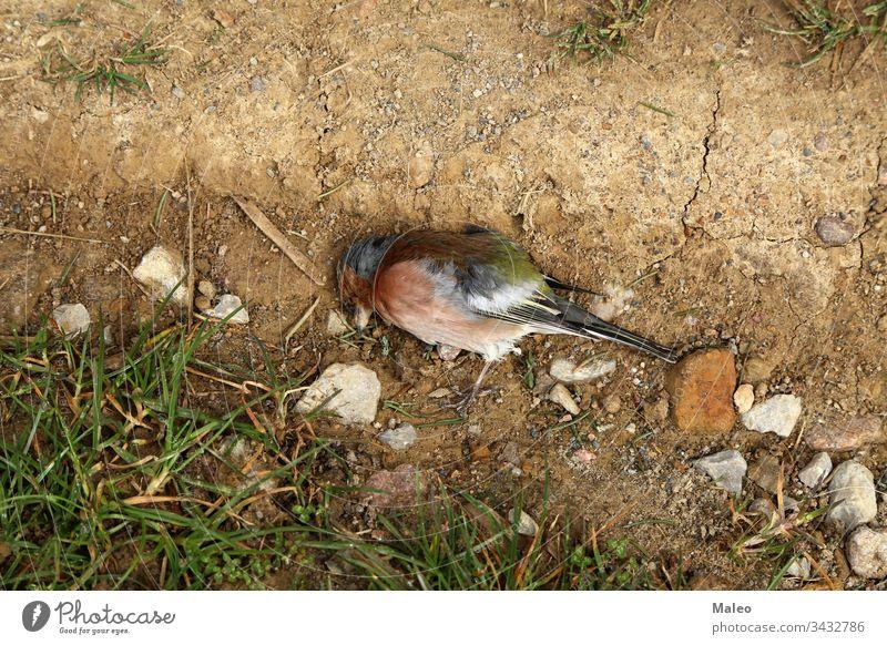Nahaufnahme eines toten Singvogels im Boden Tier Vogel Natur wild Tierwelt horizontal Fotografie männlich Baum Flügel Hintergrund Farbe Ökologie Umwelt Wald
