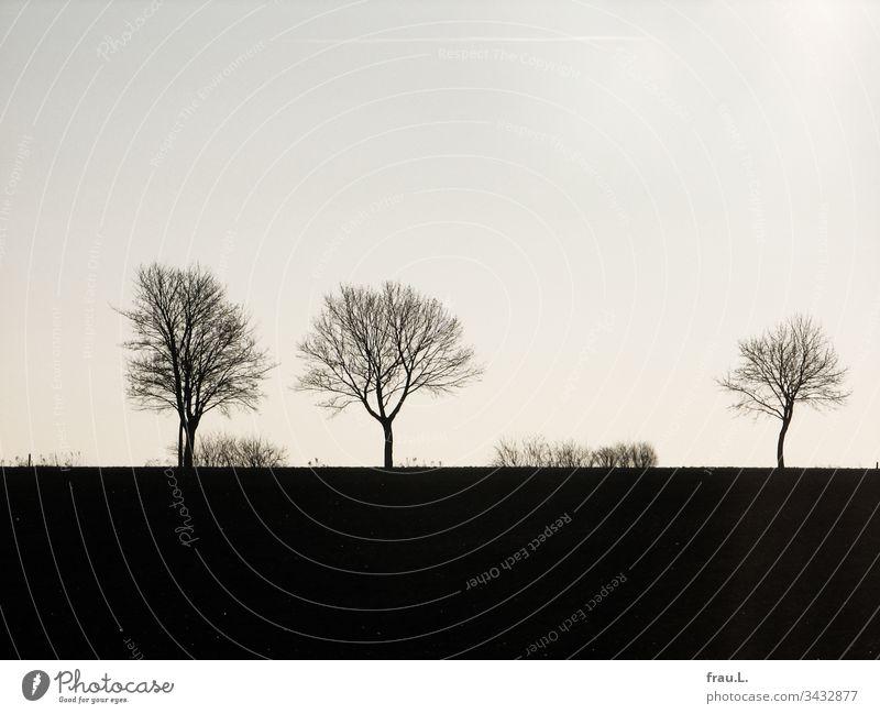 Verlorene Heimat war ihr nicht das öde Dorf, es waren die Felder und einsamen Landstraßen. Baum Menschenleer Natur Landschaft Wege & Pfade Winter