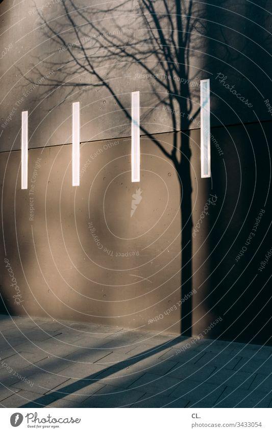 schatten eines baums Wand Schatten Schattenspiel Baum Herbst Winter gehweg Linien Strukturen & Formen ästhetisch Außenaufnahme Menschenleer Farbfoto Licht Tag