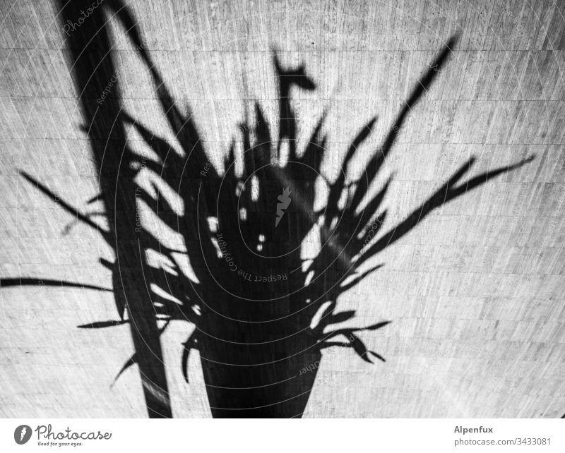 Pole dancing Schatten Pflanze Licht Blume Menschenleer Kontrast Tag Blätter Blumentopf Sonnenlicht Dekoration & Verzierung Topfpflanze Grünpflanze