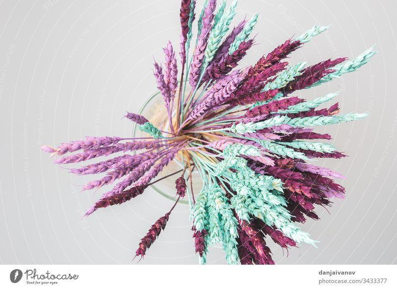 Flachliegende Komposition aus getrockneten Wildblumen Hintergrund schön Schönheit Blüte Blumenstrauß Nahaufnahme Zusammensetzung Dekoration & Verzierung