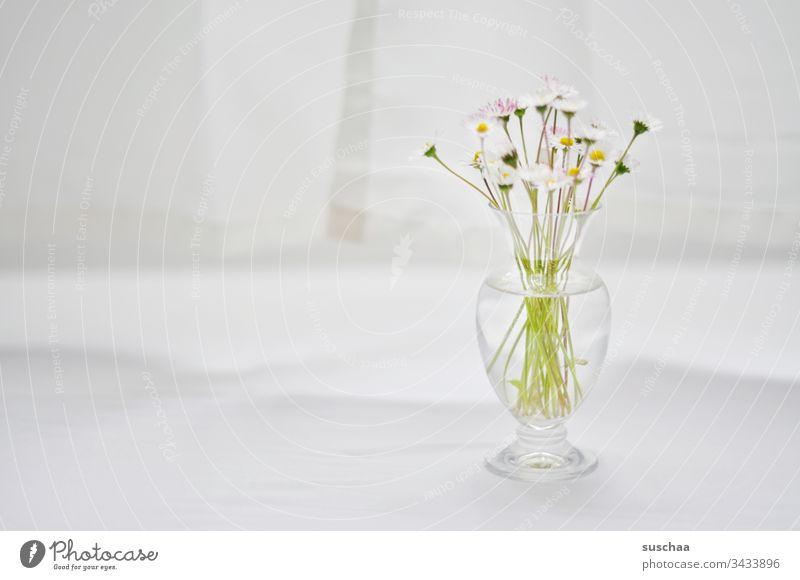 gänseblümchen in glasvase / vorsichtiger optimismus Gänseblümchen Blumen Blüte Stängel Vase Glasvase hell lichtdurchflutet Tischdecke Vorhang weiß