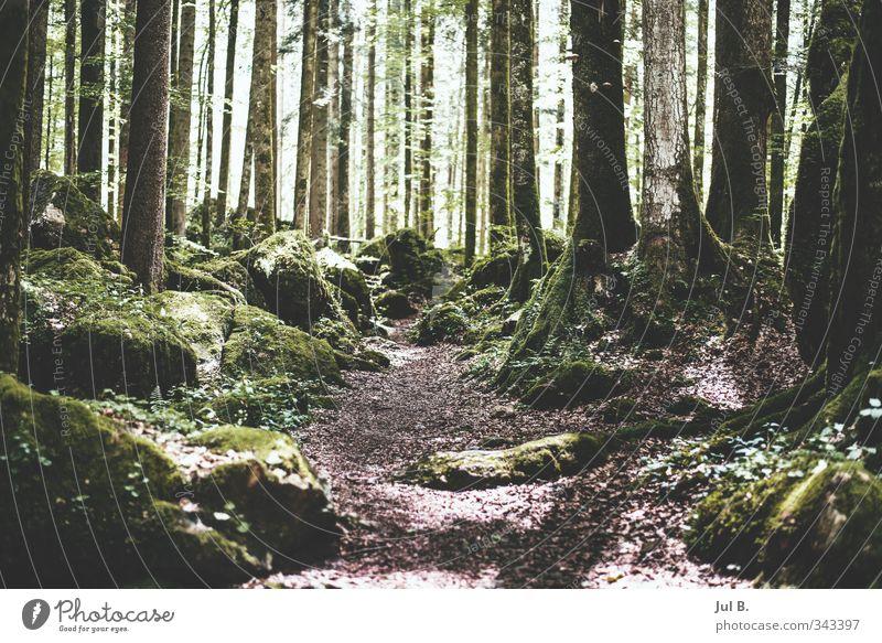 Steinwald grün Wald Berge u. Gebirge Frühling Luft Wetter wandern Schönes Wetter