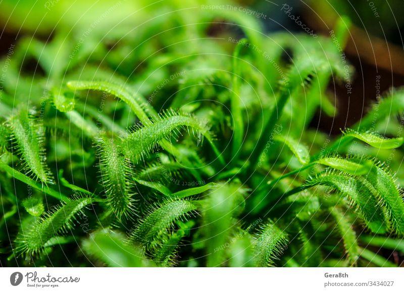 frische grüne Pflanze hautnah Natur natürlich Frühling Sommer Blüte Grün Garten Gemüsegarten Spross Blätter farbig Leben im Detail Nahaufnahme