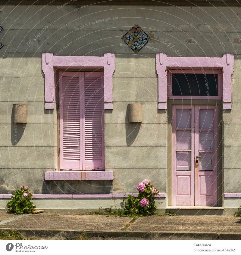 Die rosa  gestrichenen Fensterläden und Haustüre frischen die graue Fassade auf. Zwei rosa Hortensien kümmern vor sich hin Wohnhaus Häusliches Leben Architektur