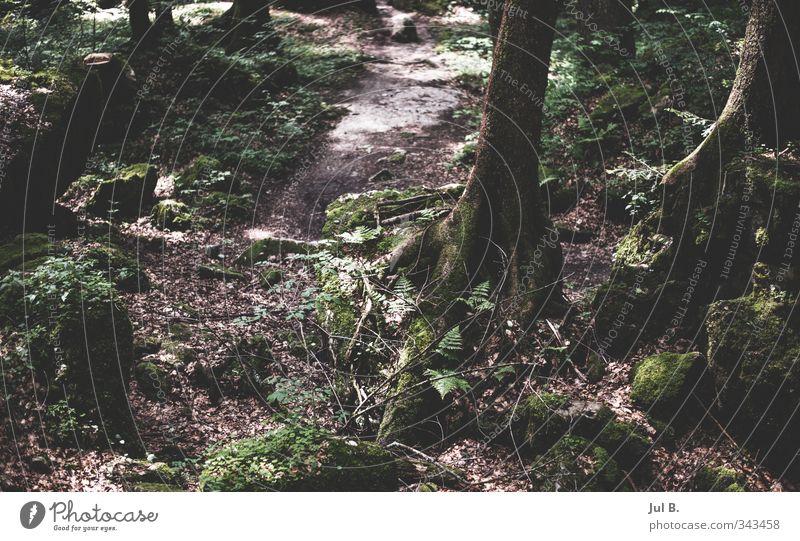 Wurzelbaum Natur schön Pflanze Baum Landschaft Wärme wandern Moos