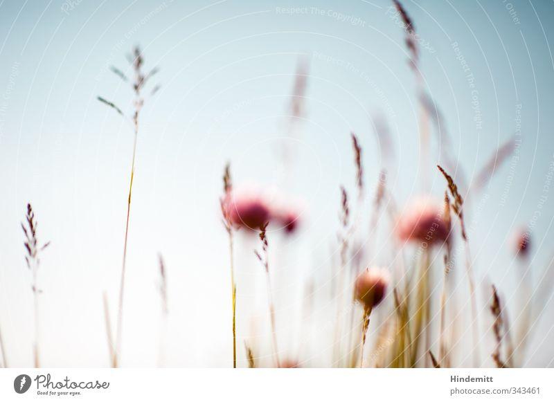 Schnittlauch II [mitte rechts, immer noch unscharf] Himmel Natur blau schön Sommer Pflanze ruhig Umwelt Wärme Gras Frühling Blüte braun außergewöhnlich Wind Wachstum