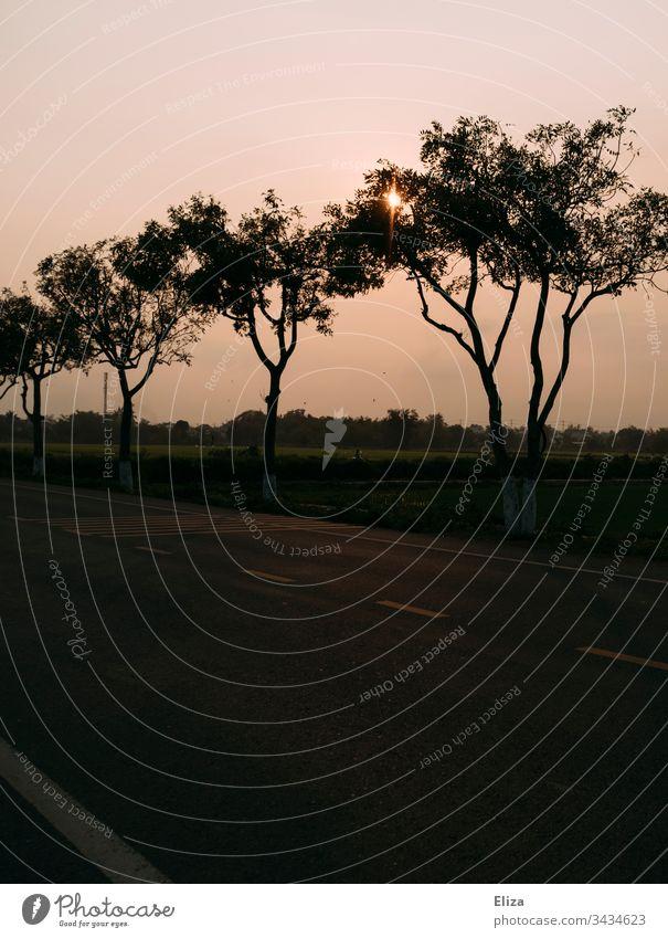 Eine leere Straße mit Bäumen am Straßenrand am Abend bei Dämmerung Abenddämmerung Stimmung Sonne Himmel Gegenlicht Sonnenstrahlen ruhig Sonnenlicht Natur