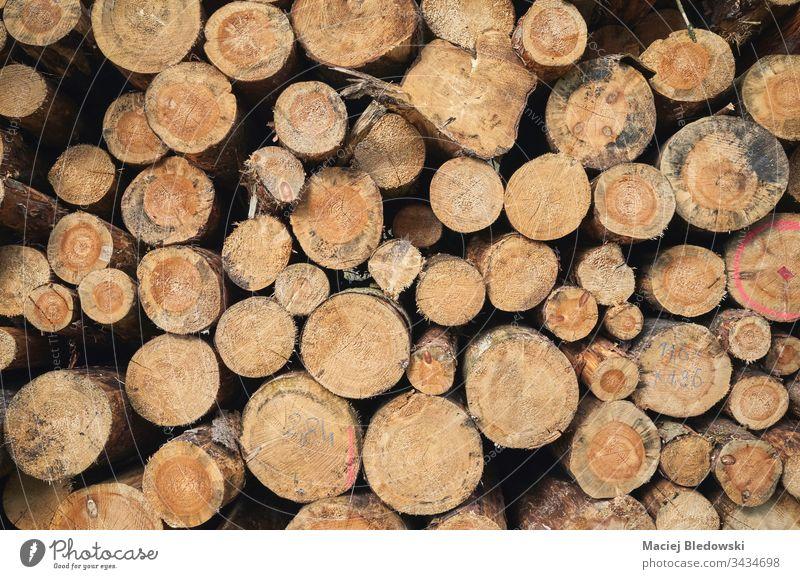 Nahaufnahme von gestapelten Baumstämmen. Haufen Holz Totholz Wald Kofferraum Hintergrund geschnitten Nutzholz Stapel natürlich Natur Holzstapel Industrie roh